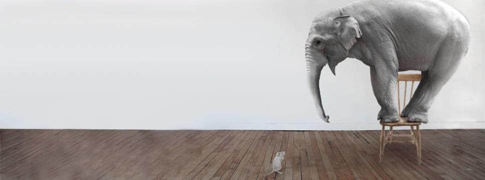 Elephant on a chair afraid of a mouse on the floor