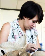 Alexis Demey, auteur et anthropologue