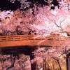 高遠の桜の渋滞や混雑を避ける!すいている時間と駐車場のご紹介