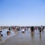 潮干狩りに最適な時間と干潮の確認方法 満潮の時はできないの?