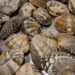 潮干狩りの貝の持ち帰り方とコツ、家までの時間が長くなる場合は?