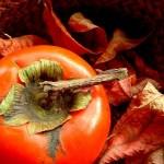 柔らかくなった柿の食べ方のおすすめ!ぶよぶよに熟れた柿を活用する方法をご紹介