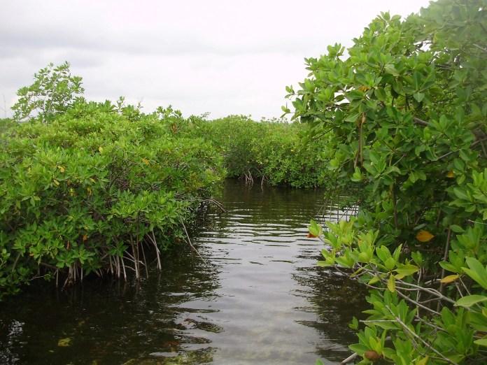 Agua pierde calidad en Quintana Roo