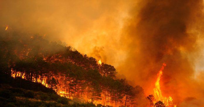 Pronostica Greenpece verano dramático por incendios