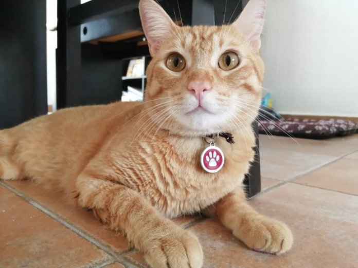 Protegen a mascotas ante histeria sanitariaProtegen a mascotas ante histeria sanitaria