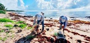 Dan limpieza de playas en Xcacel-Xcacelito