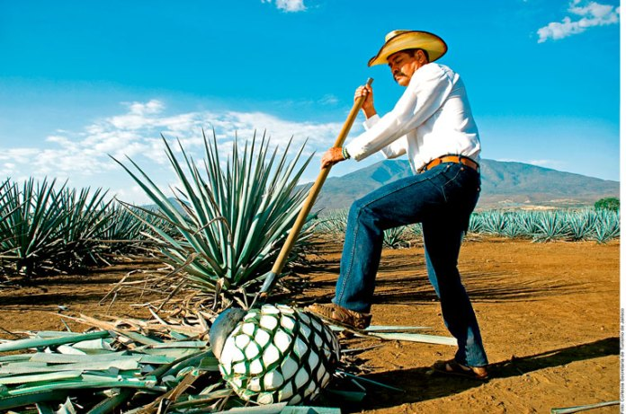 ¡Salud por México!