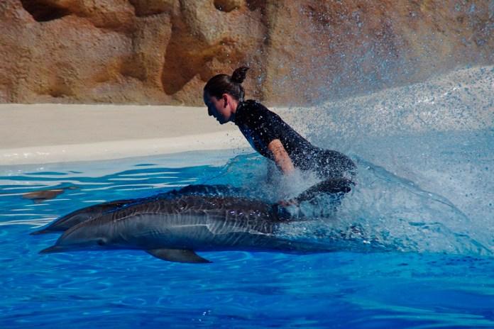 Atacarán 'mitos' sobre delfines en cautiverio