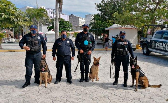 Con olfato de policía: Unidad Canina de la SSP QR