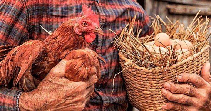 Llaman a consumir huevo y cerdo libre de jaulas