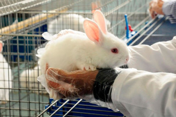 Inicia vacunación ahora… a conejos