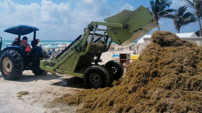 Actualiza la Marina lineamientos sobre manejo de sargazo