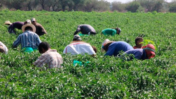 Vislumbran demandas en agro