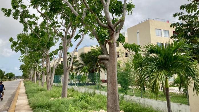 Reubican 50% de árboles del camellón de carretera Cancún-Tulum