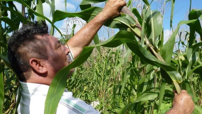 Impulsa Sader a productores de Quintana Roo