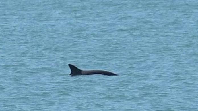 Alertan desprotección de la vaquita marina