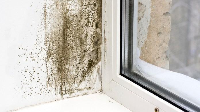 Humedad y filtración de agua, principales problemas en viviendas