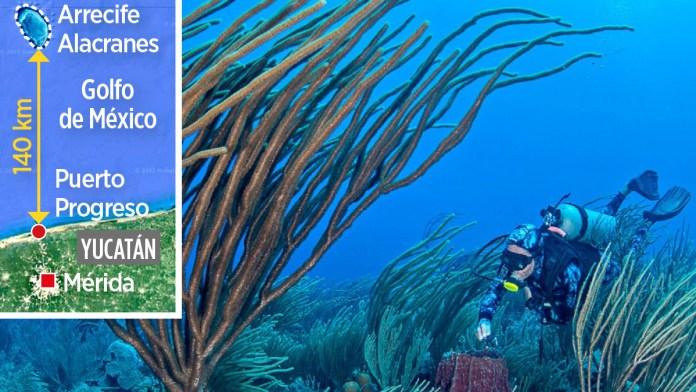 A bordo del Caribbean Kraken, 10 científicos nacionales y extranjeros buscan garantizar que las niñas y los niños del futuro puedan seguir observando especies marinas.