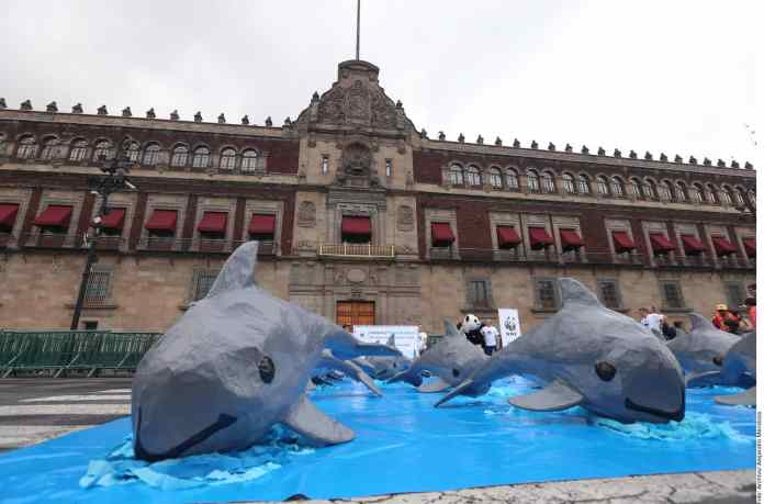 Exigen evitar extinción de vaquita marina