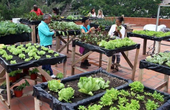 Agricultura urbana ¿solución para la crisis alimentaria?