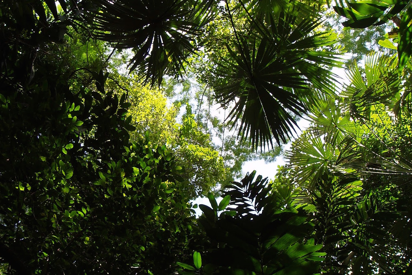 Does more atmospheric carbon mean bigger plants?