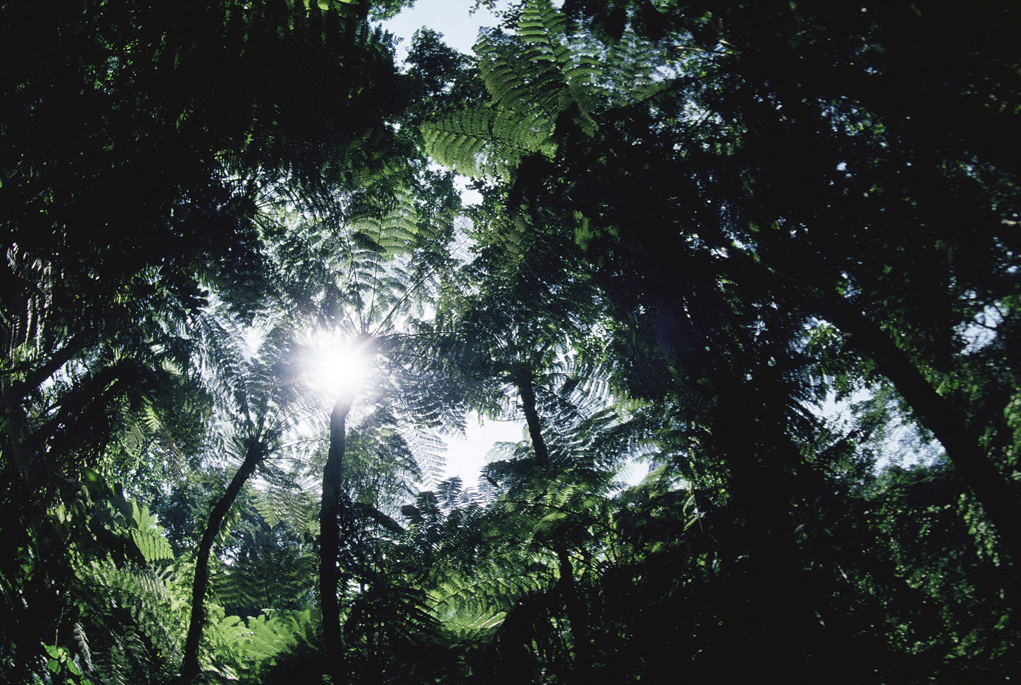 Global plant growth not keeping up with CO2 emissions