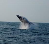 BaleineAu large Portgentil