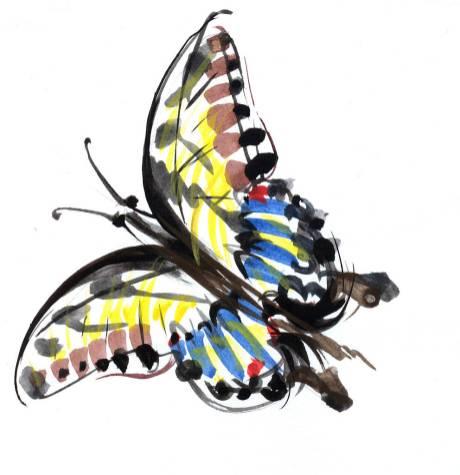 Fluturele - ilustratie de George Romila