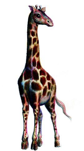 Girafa - ilustratie de George Romila