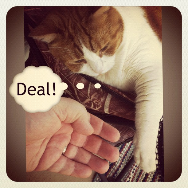 Business agreement with my cat: Deal!
