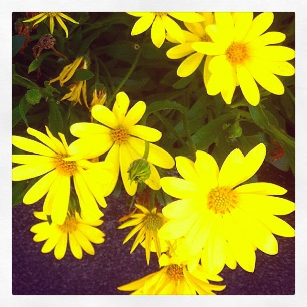 Beautiful yellow summer flowers