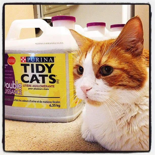 Mr.Tom enjoys his new Purina Tidy Cats batch!