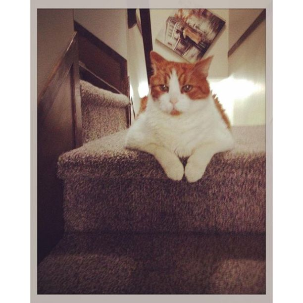 Mr Tom - These stairs are mine!