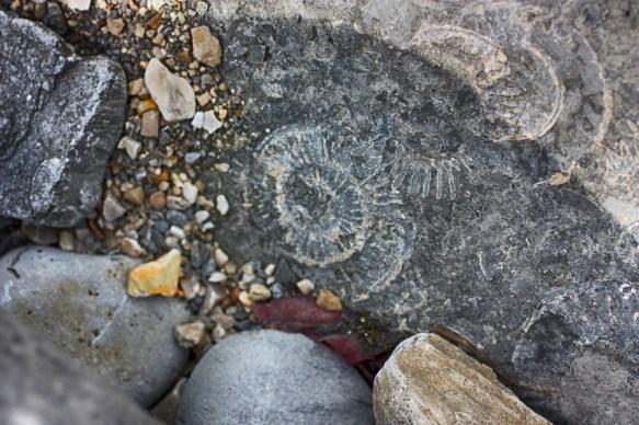 fossila