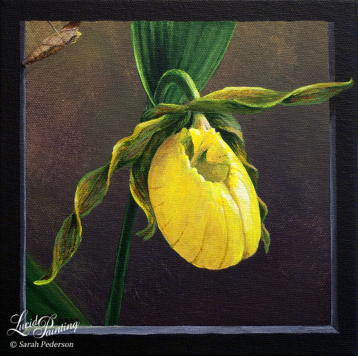 Lady slipper orchid in full bloom with tendrils coming beyond the trompe l'oeil frame. A tiger swallowtail butterfly chrysalis is in the upper corner, waiting to hatch. Fine art on canvas.