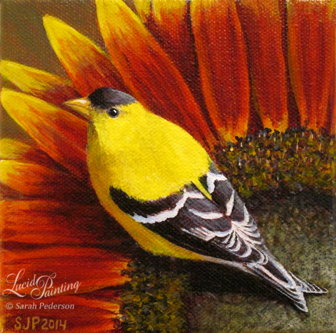Male goldfinch sits on a sunflower with red, orange, and yellow petals. The bird is looking directly up at the viewer in a unique perspective. Fine art on canvas.