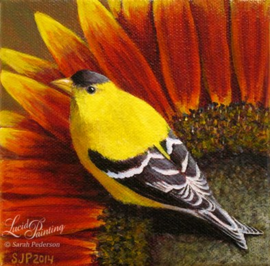 Male goldfinch sits on a sunflower with red, orange, and yellow petals.