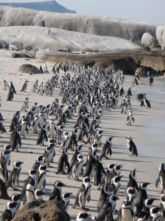 Pingus, thousands of 'em