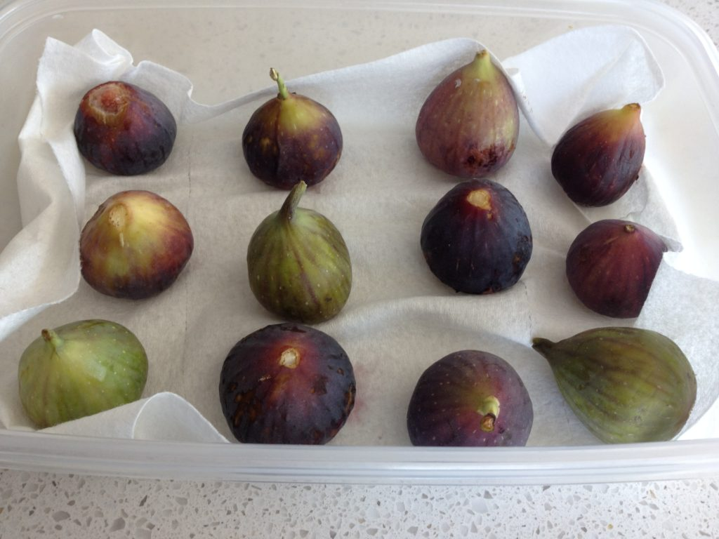 Figs In Tupperware- LuciFit