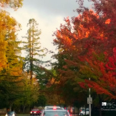 autumn-splendor-on-campus