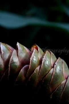 plant lucinda price photography
