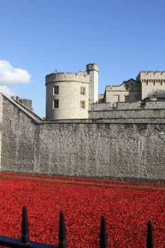 Lucinda Price photography poppies tower of london