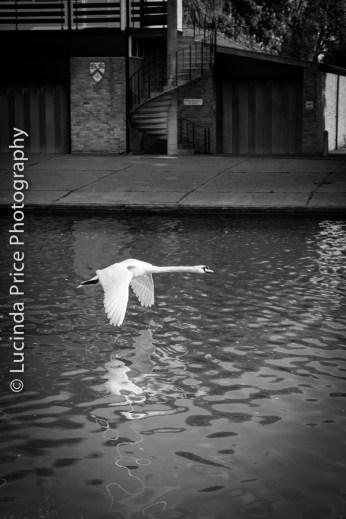 Lucinda Price Photography Cambridge Swan River Cam