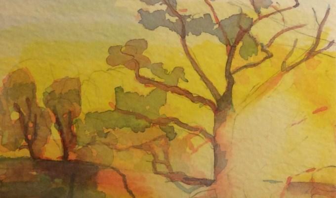Tree, misty morning