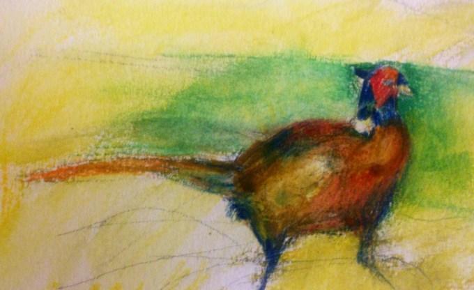 Pheasant, watercolour, 15 x 11 cm