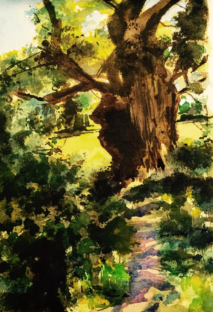 Ancient Oak, Hazelgrove, Watercolour, 15 x 12 cm