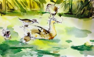 Nice Weather For Ducklings, Watercolour, 22 x 11 cm