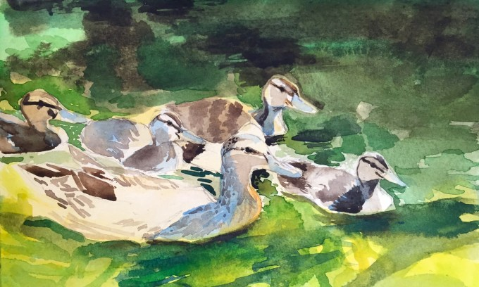 Mallard and Ducklings, Watercolour, 22 x 11 cm