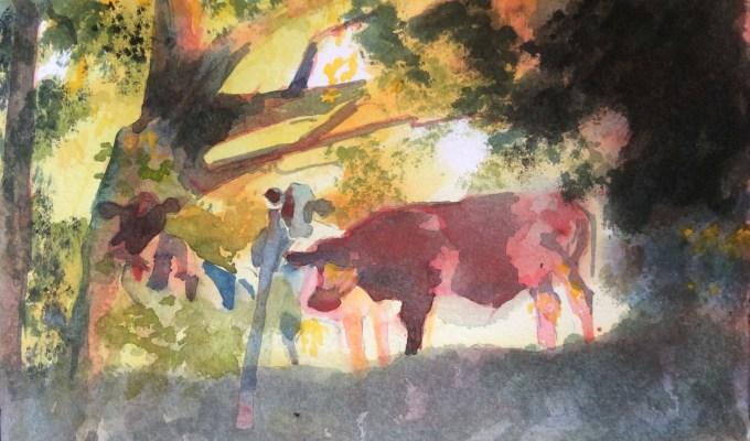 Cattle Emerging