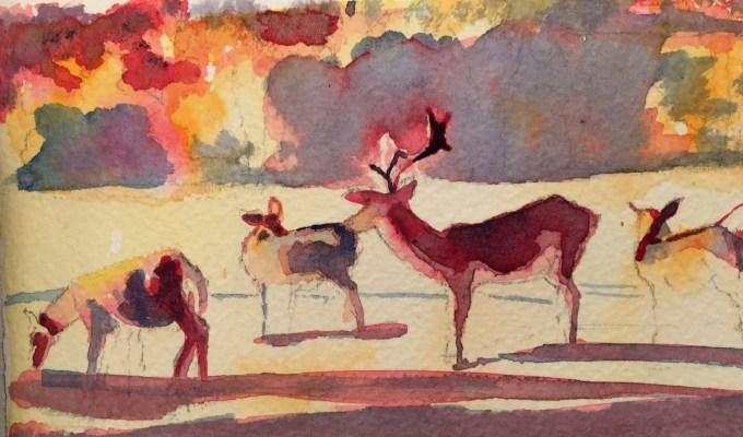 Morning Deer II